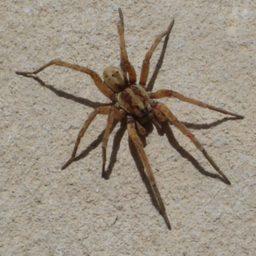 Уничтожение пауков в Ишиме